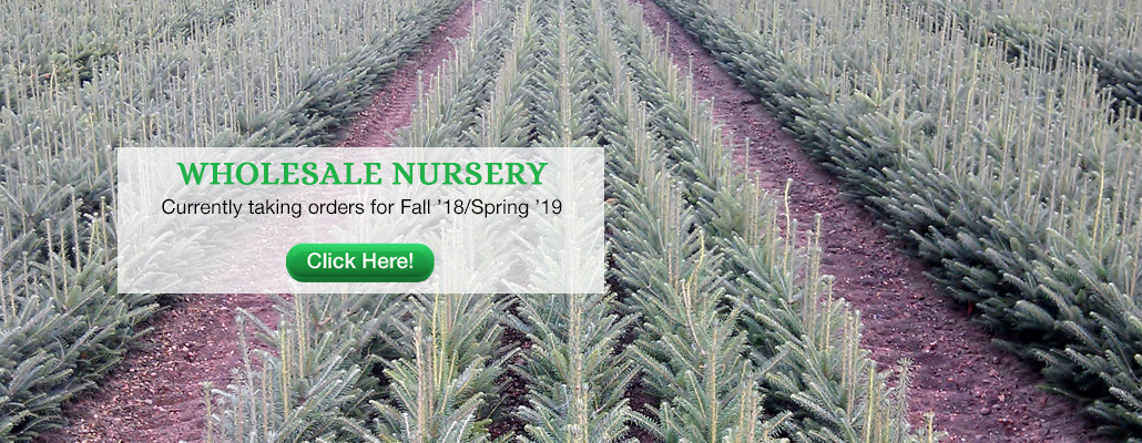 Peterson's Riverview Nursery, LLC | A Wholesale Evergreen Seedling ...